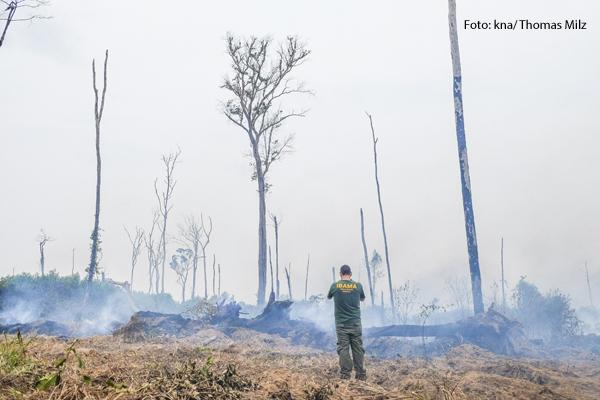 Verbrannte Bäume in Brasilien,